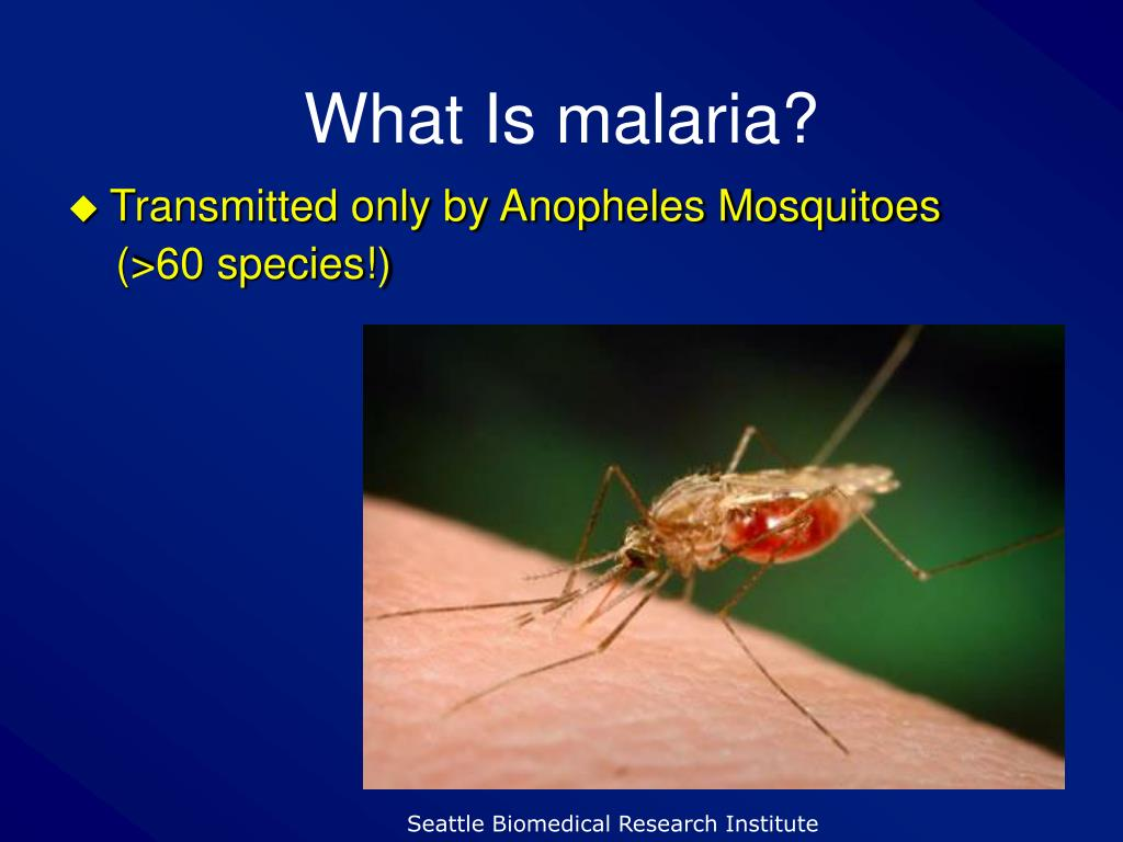 What Is malaria?
