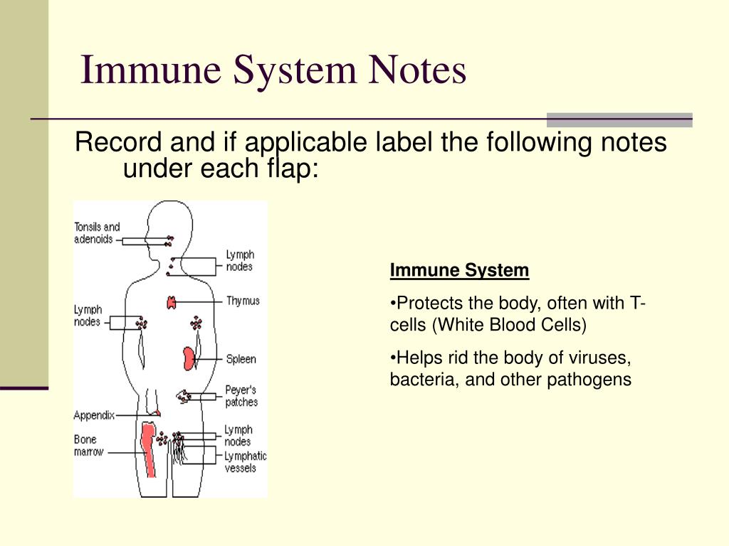 Immune System Notes
