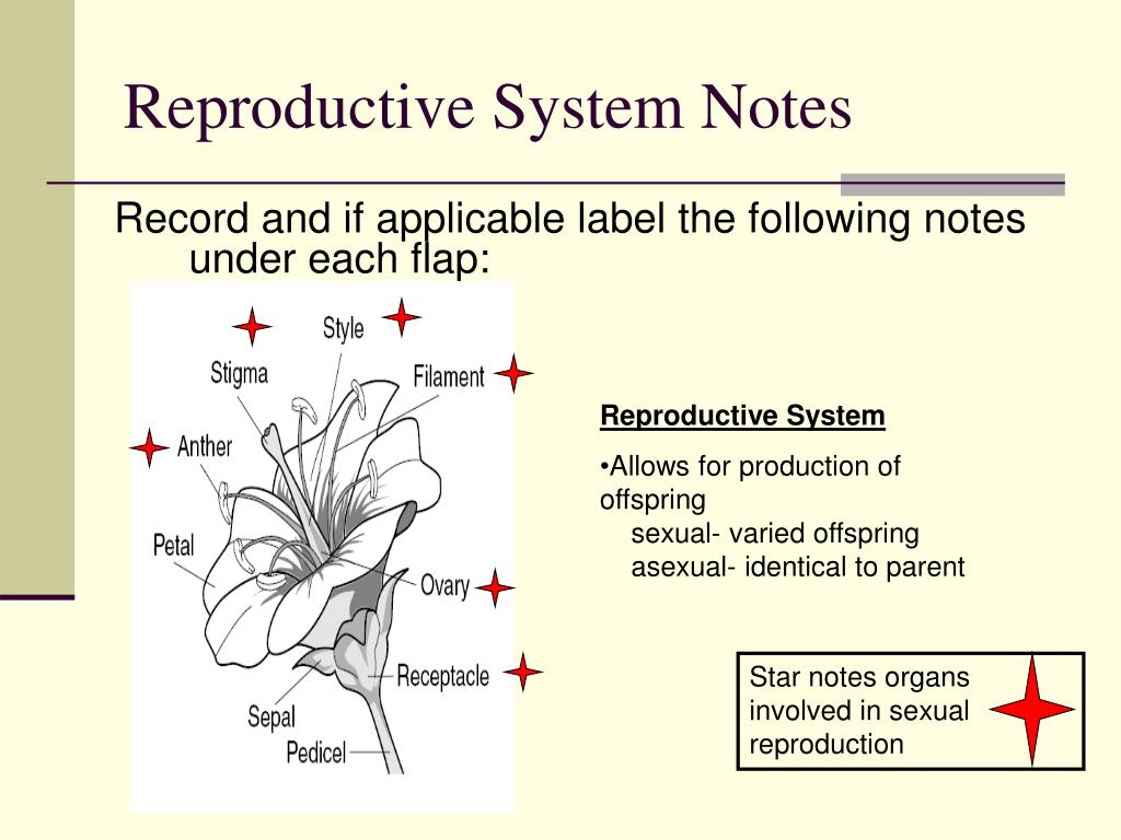 Reproductive System Notes