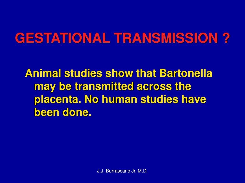 GESTATIONAL TRANSMISSION ?