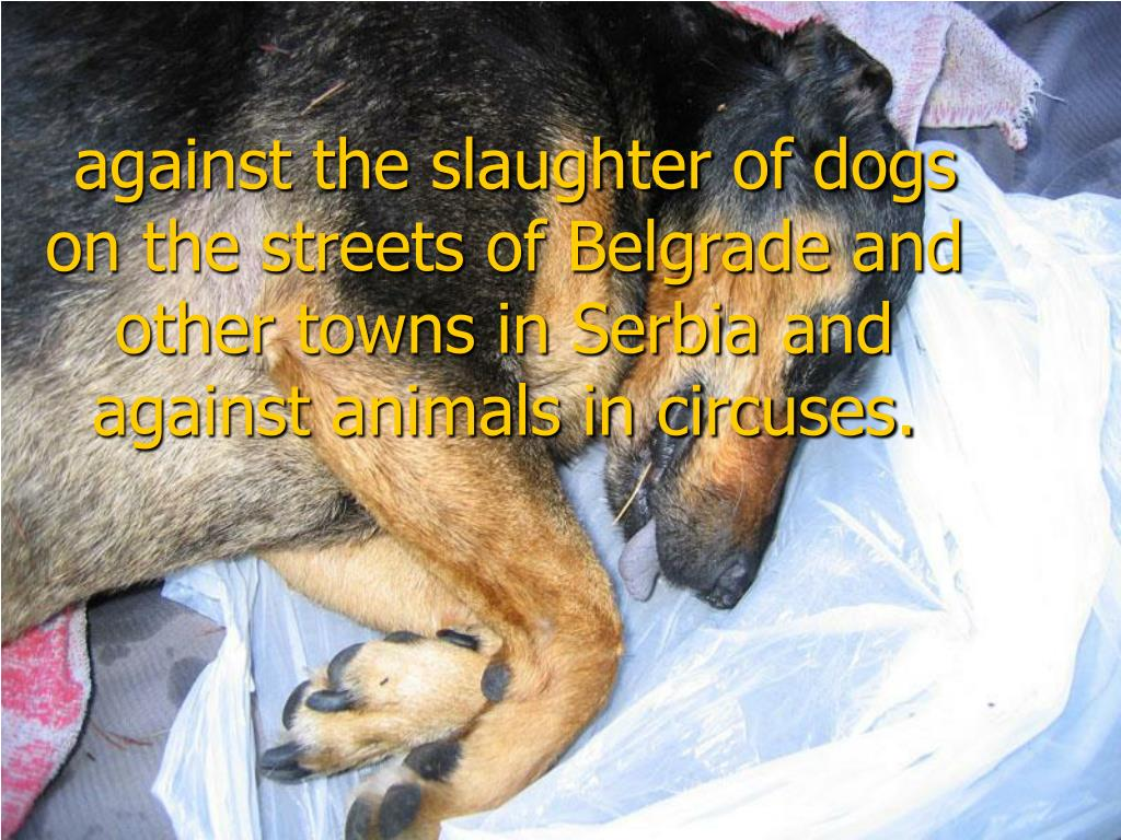 against the slaughter of dogs on the streets of Belgrade and other towns in Serbia and against animals in circuses.