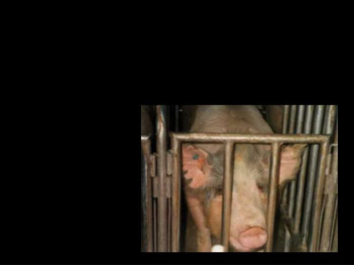 Meatless and animal rights day