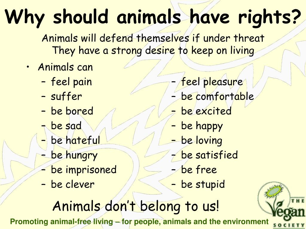 Animals can