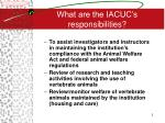 what are the iacuc s responsibilities