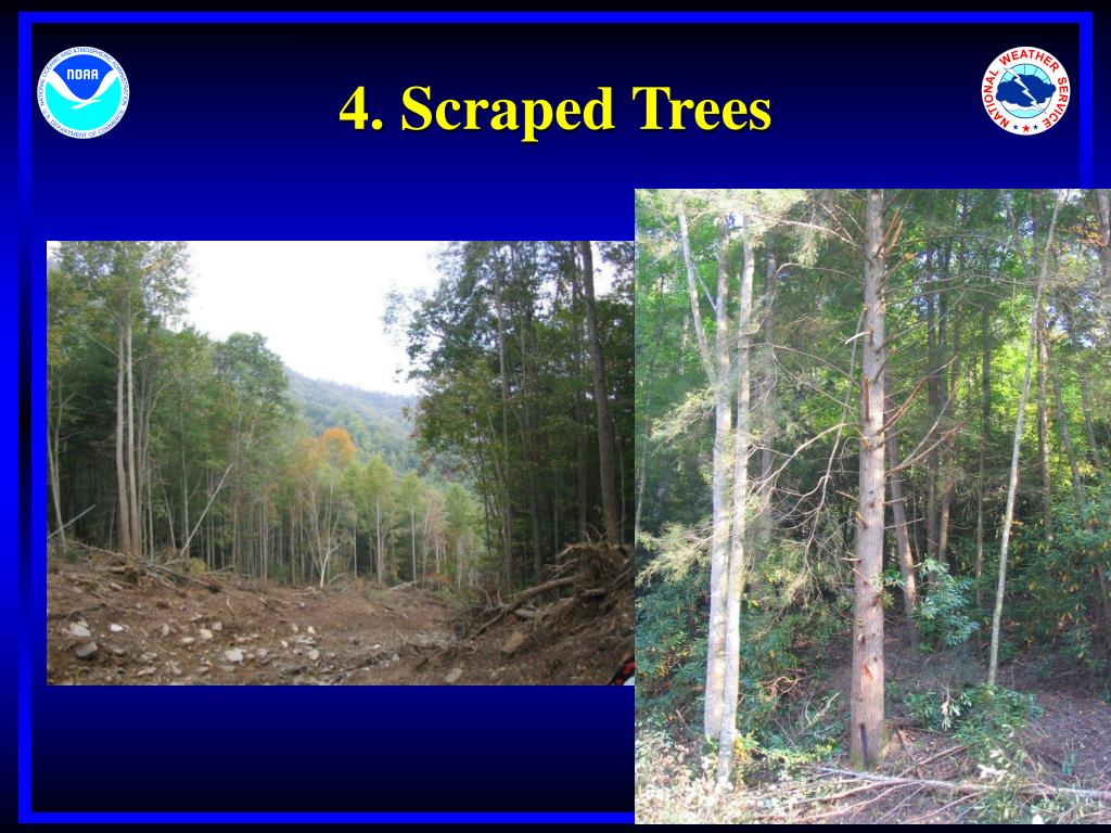 4. Scraped Trees
