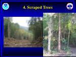 4 scraped trees