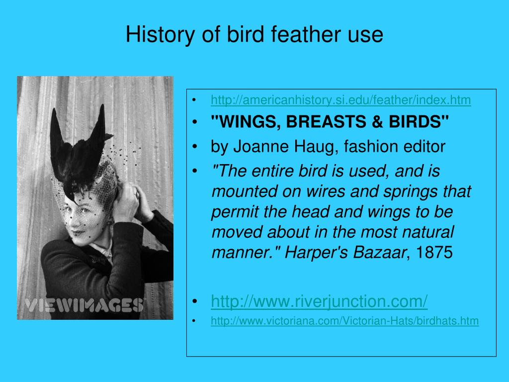 History of bird feather use