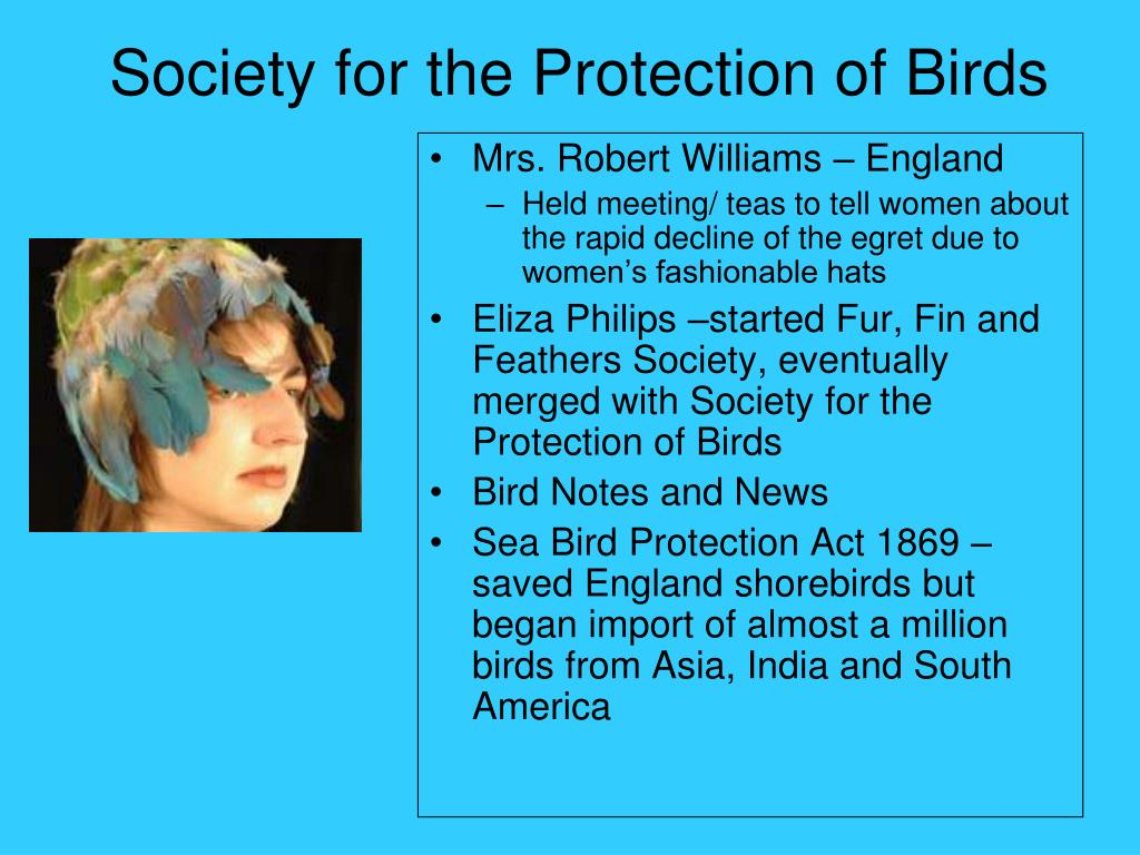 Society for the Protection of Birds