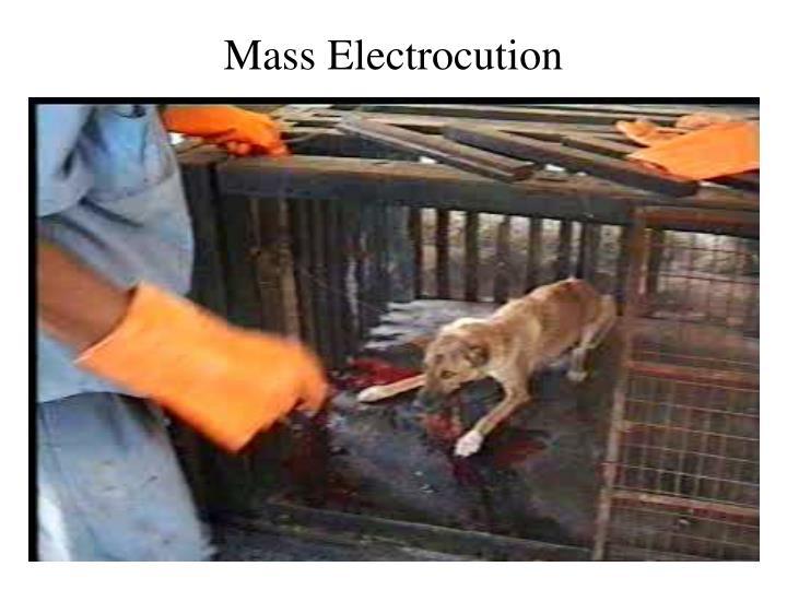 Mass electrocution