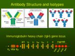 antibody structure and isotypes