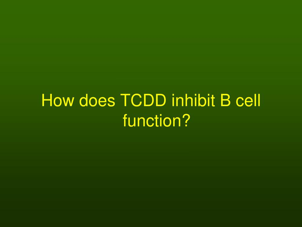 How does TCDD inhibit B cell function?