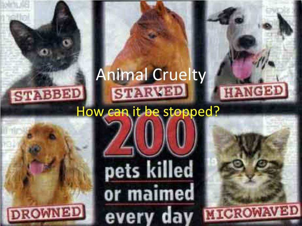 animal cruelty l.