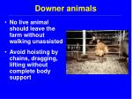 downer animals