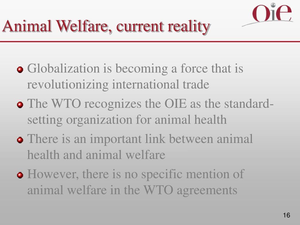 Animal Welfare, current reality