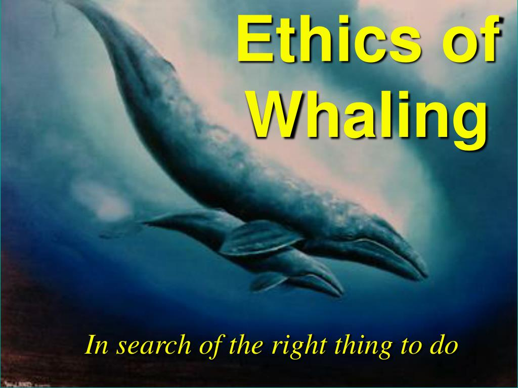 ethics of whaling l.