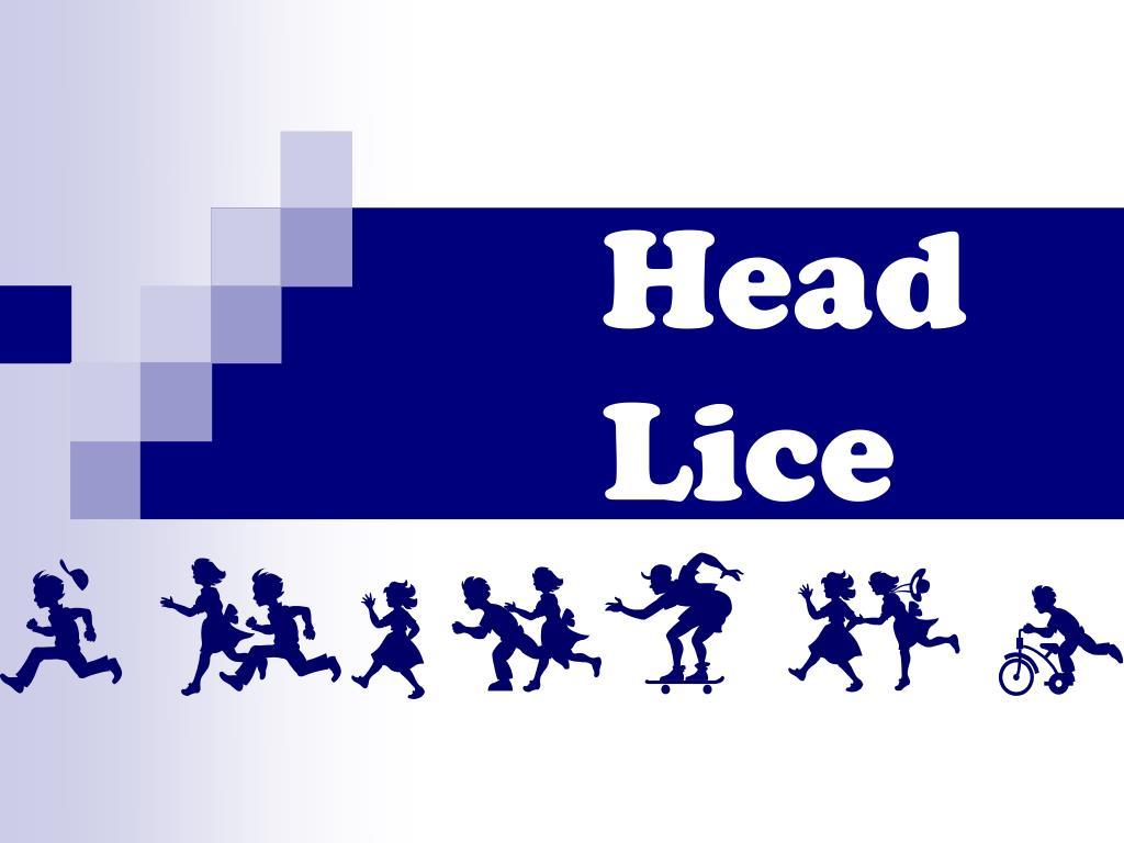 head lice l.
