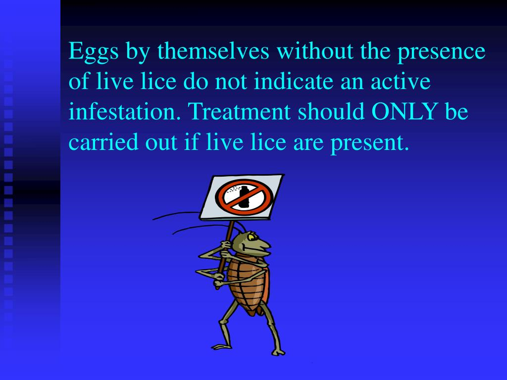 Eggs by themselves without the presence of live lice do not indicate an active infestation. Treatment should ONLY be carried out if live lice are present.