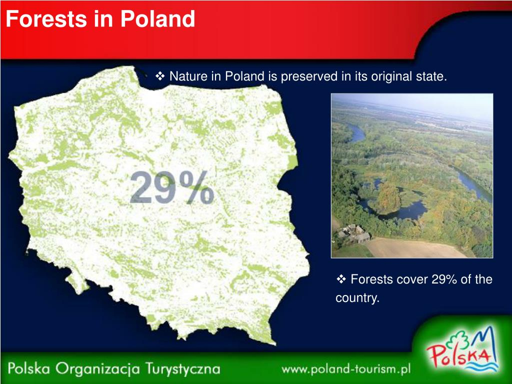 Forests in Poland