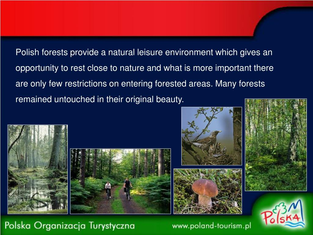 Polish forests provide a natural leisure environment which gives an opportunity to rest close to nature and what is more important there are only few restrictions on entering forested areas. Many forests remained untouched in their original beauty.