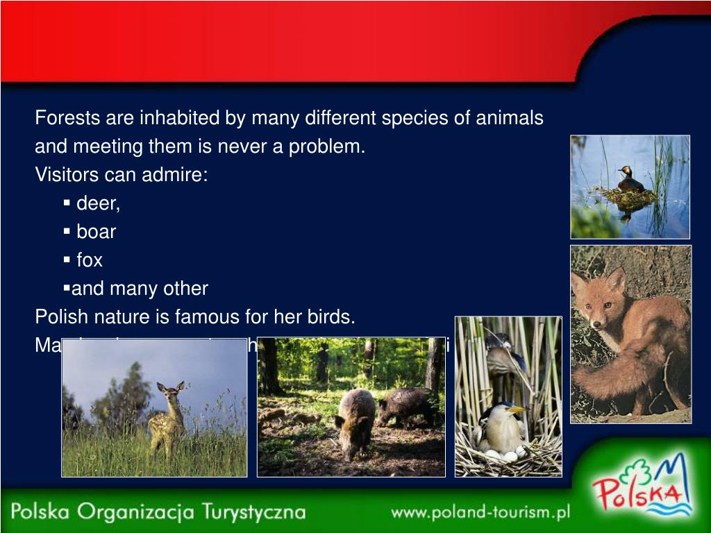 Forests are inhabited by many different species of animals