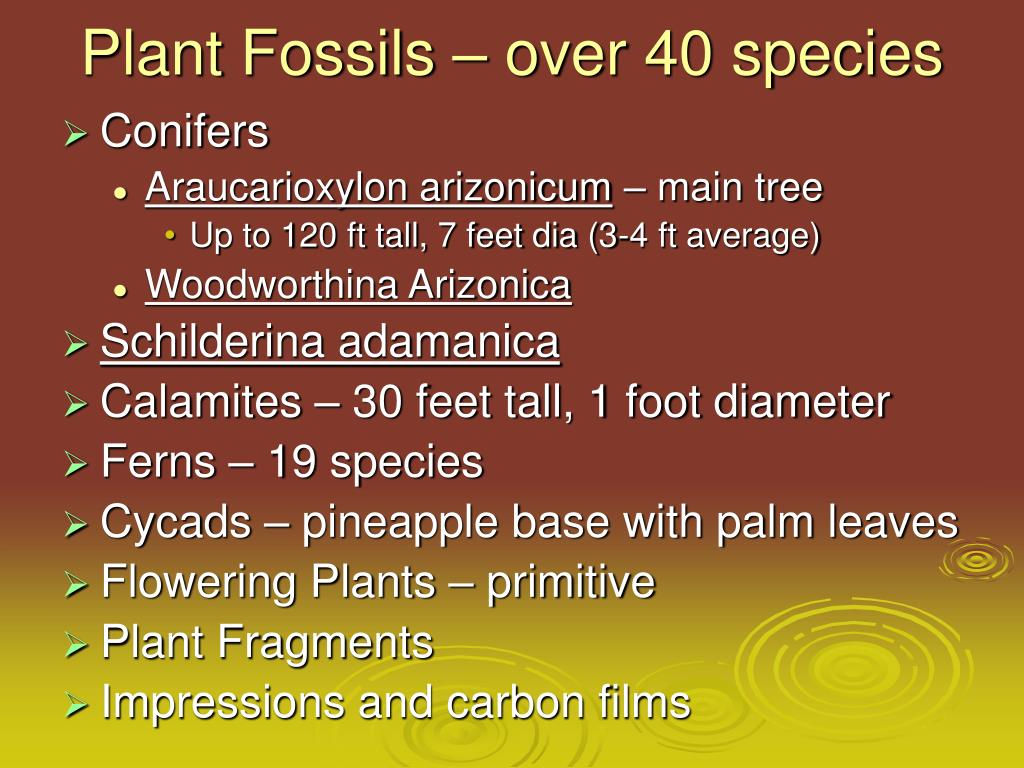 Plant Fossils – over 40 species