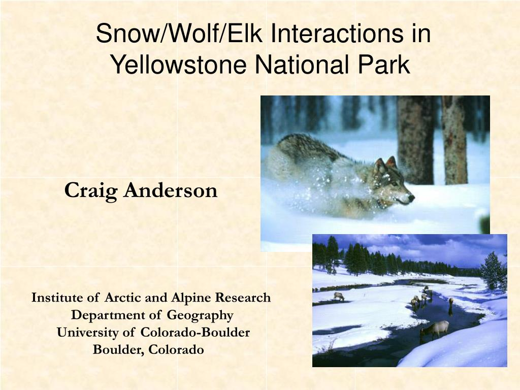 snow wolf elk interactions in yellowstone national park l.