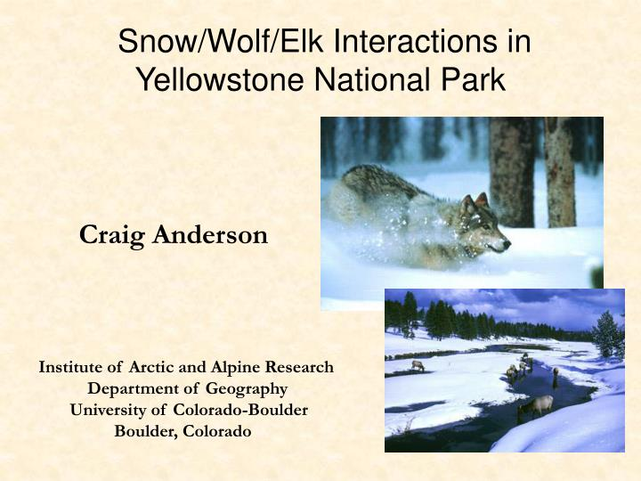 Snow wolf elk interactions in yellowstone national park
