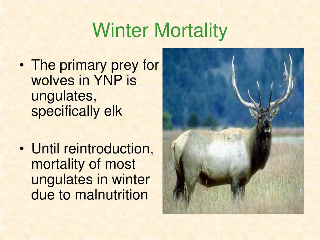 Winter Mortality