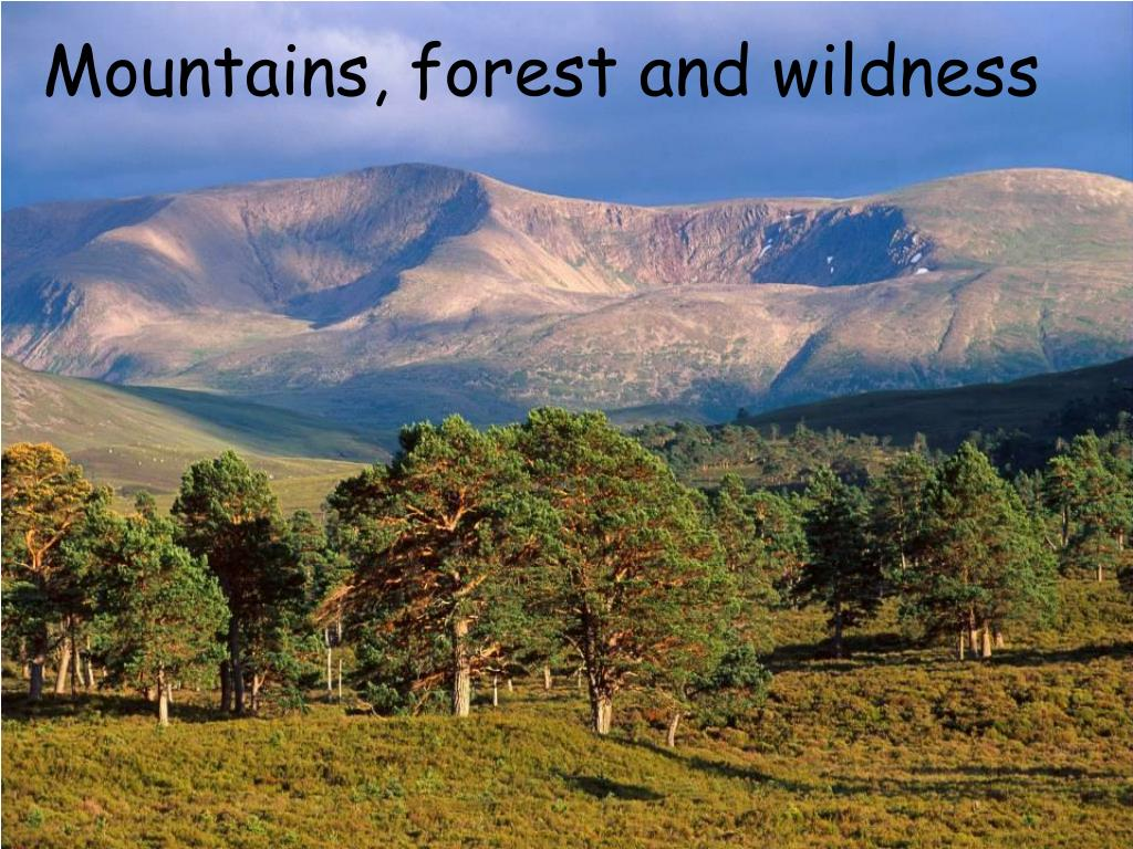 Mountains, forest and wildness