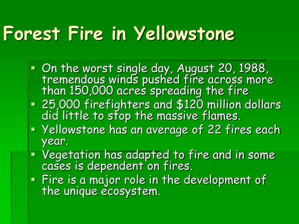 Forest Fire in Yellowstone