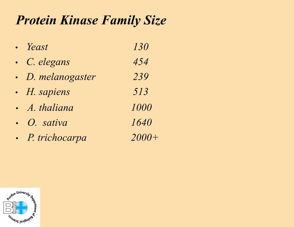 Protein Kinase Family Size