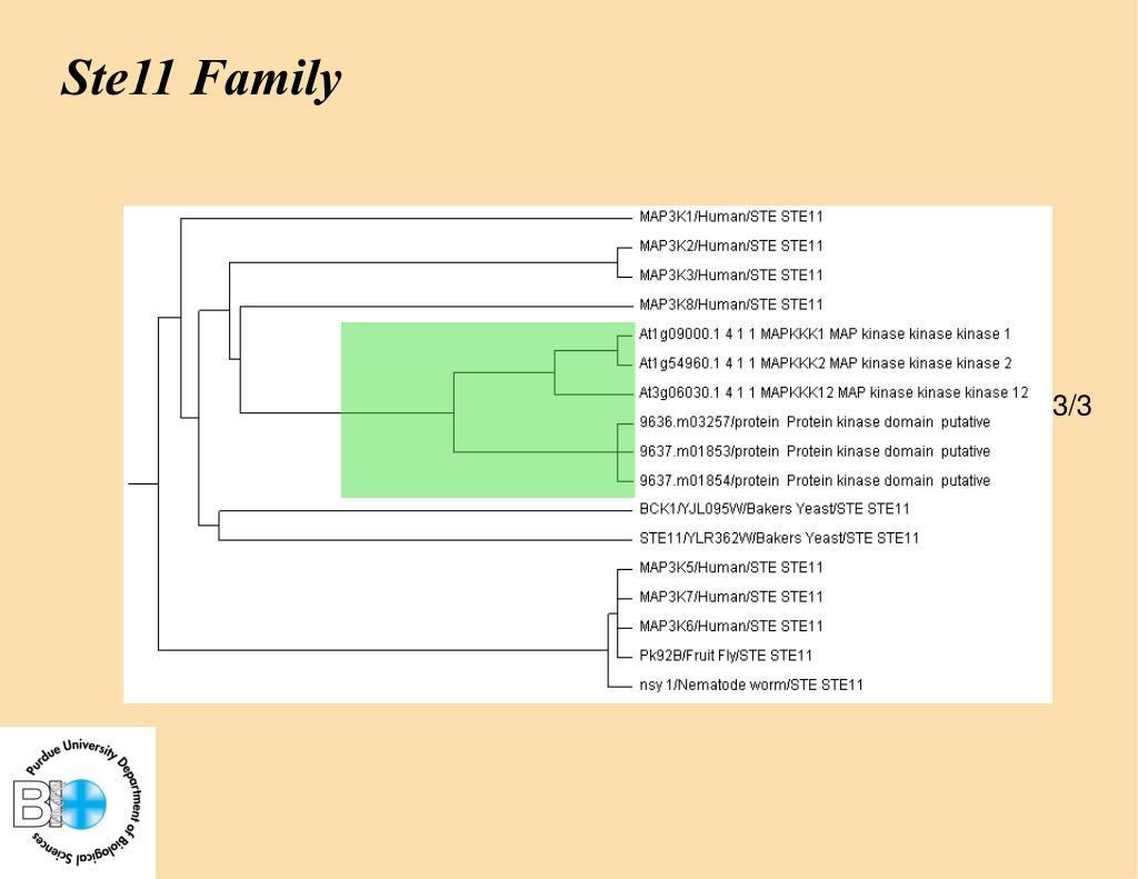 Ste11 Family