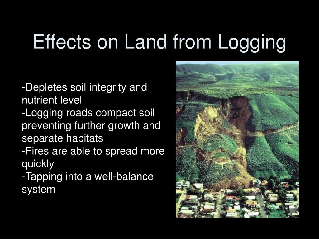Effects on Land from Logging