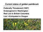 current status of golden paintbrush