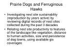 prairie dogs and ferruginous hawks