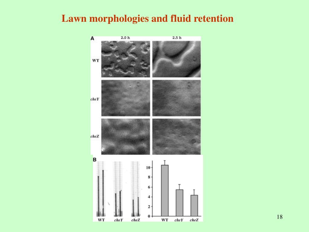 Lawn morphologies and fluid retention