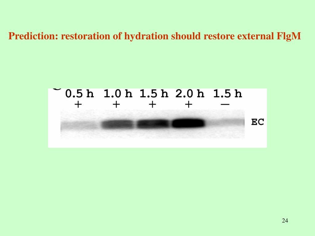 Prediction: restoration of hydration should restore external FlgM
