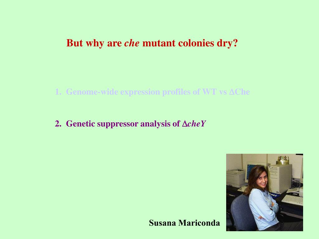 1.  Genome-wide expression profiles of WT vs