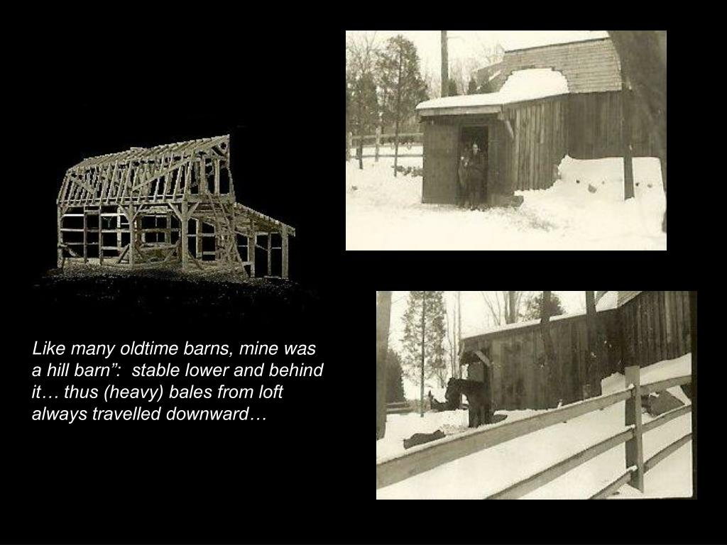 """Like many oldtime barns, mine was  a hill barn"""":  stable lower and behind it… thus (heavy) bales from loft always travelled downward…"""