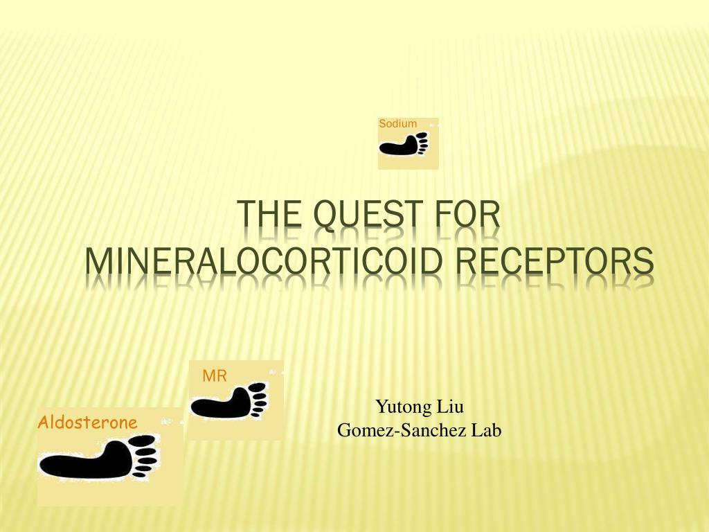 the quest for mineralocorticoid receptors l.
