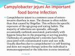 campylobacter jejuni an important food borne infection
