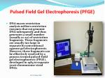 pulsed field gel electrophoresis pfge
