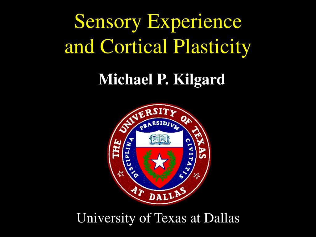 sensory experience and cortical plasticity l.