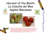 harvest of the month la cosecha del mes apples manzanas