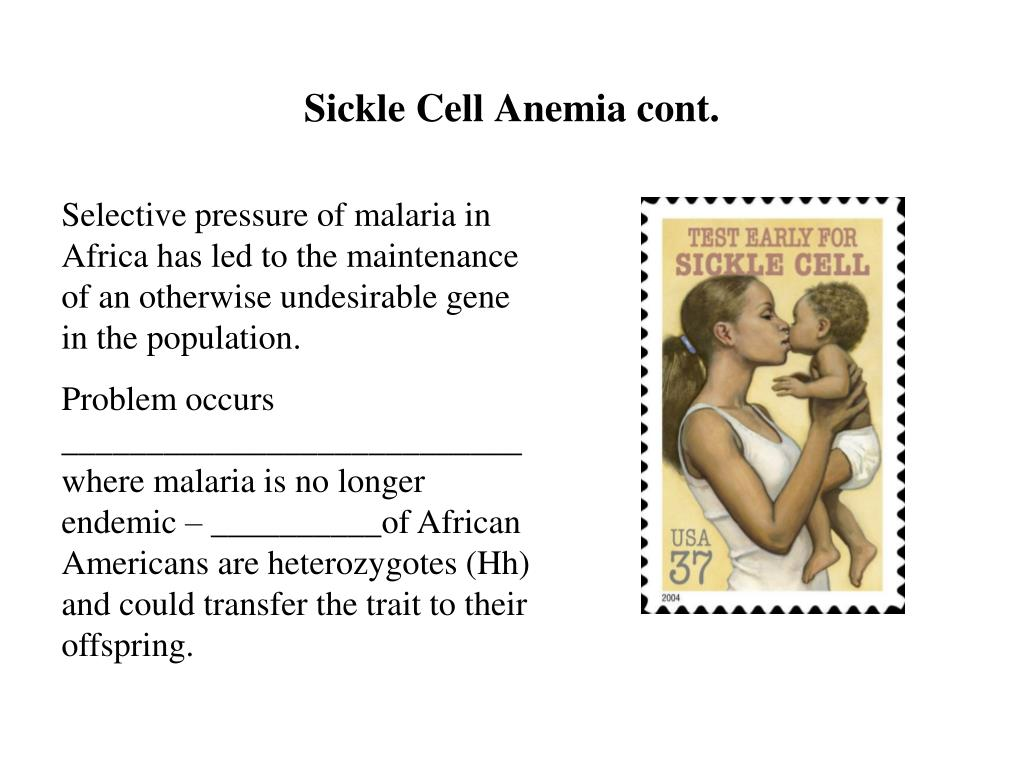 Sickle Cell Anemia cont.