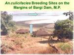 an culicifacies breeding sites on the margins of bargi dam m p