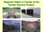 stagnant water in canals of the sardar sarovar project