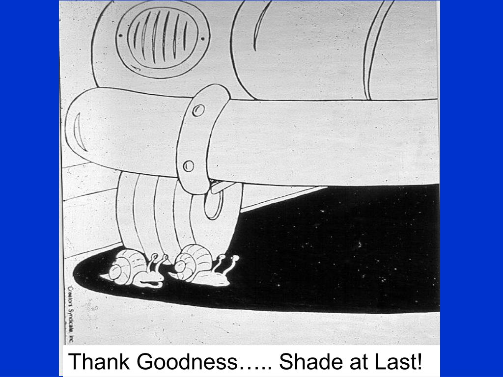 Thank Goodness….. Shade at Last!