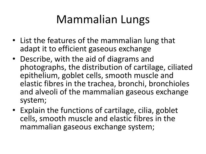 Ppt mammalian lungs powerpoint presentation id688905 mammalian lungs ccuart Gallery