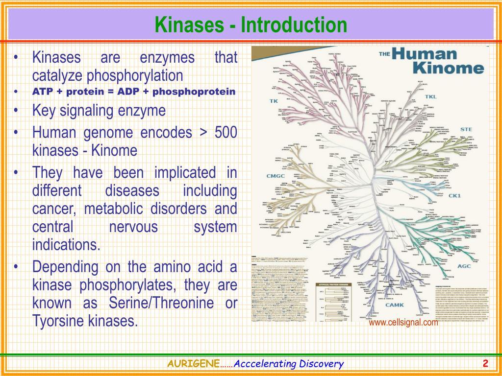 Kinases - Introduction